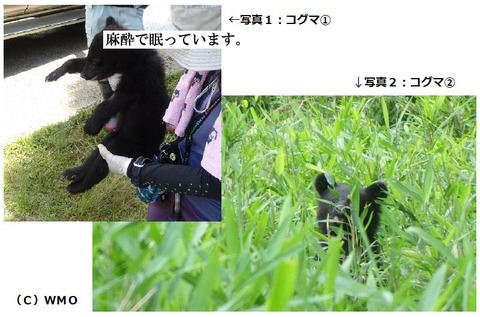 20150617_bearbear