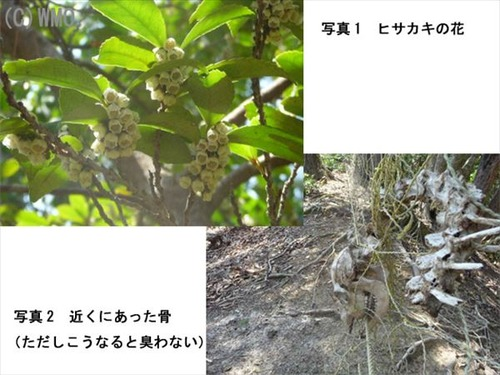 20110613_hisakaki