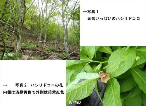 20120605_hashiridokoro