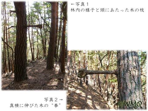 20160425_kinokobushi