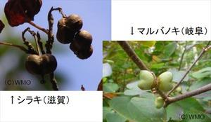 20120405_ribon
