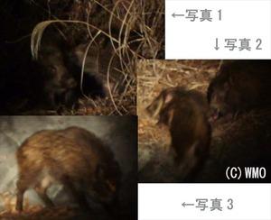 20120311_inoshishi