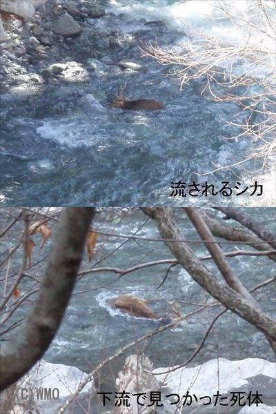 20100609_kibisiifuyu