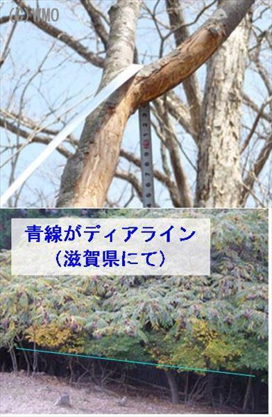 20100611_takasa214