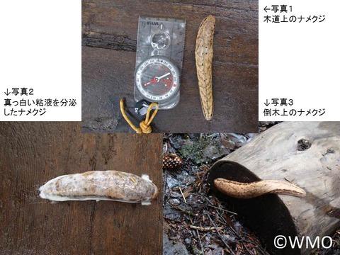20140921_snail