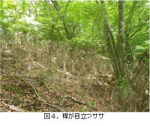 No115 図4