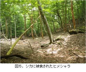 No115 図5